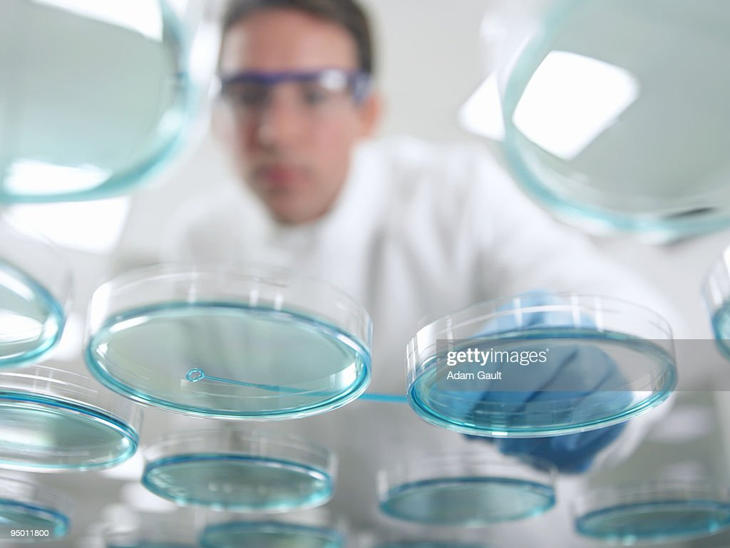 Scientist working with petri dishes
