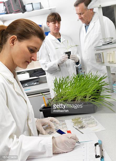 Scientists conducting biological research with a plant