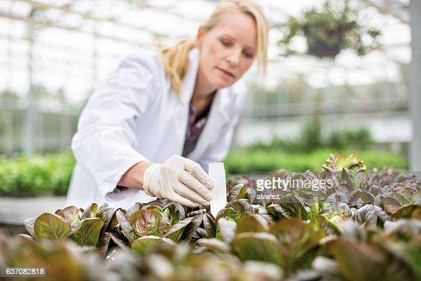Scientists doing research in greenhouse farm