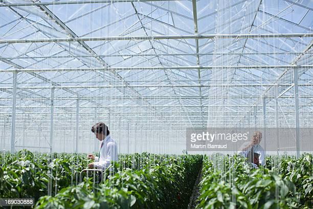Les scientifiques examiner produire dans une serre