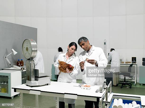 Scientifiques dans un laboratoire de poulet