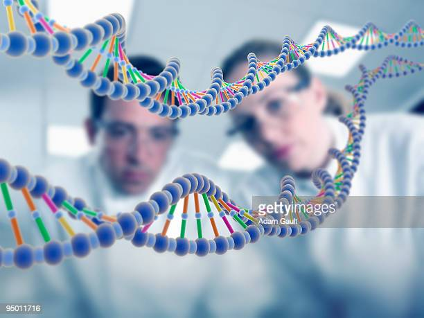 Scientists looking at DNA model