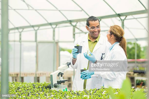 Scientists smiling at each other while working in a greenhouse