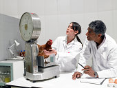 Scientists weighing chicken in laboratory