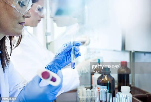 Scientists Working in the Digestorium