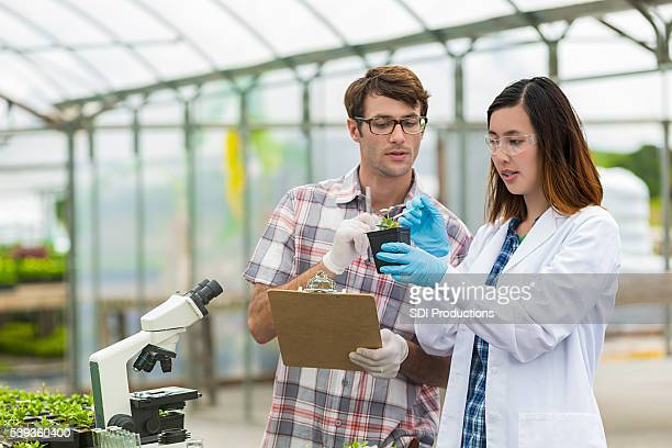 Scientists working together in a greenhouse