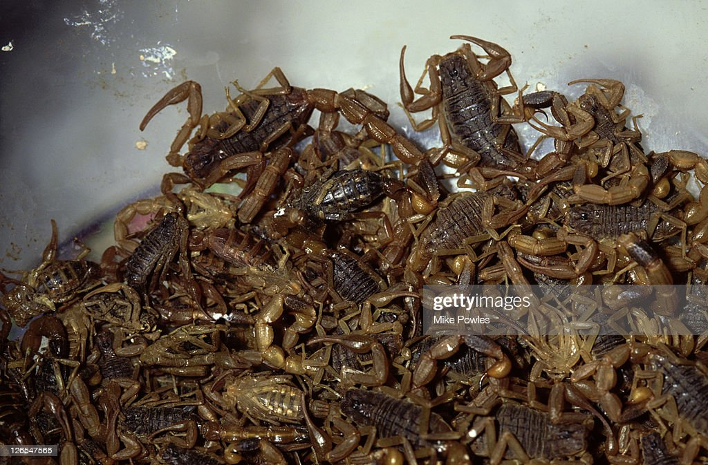 Scorpions sold for food, China : Stock Photo