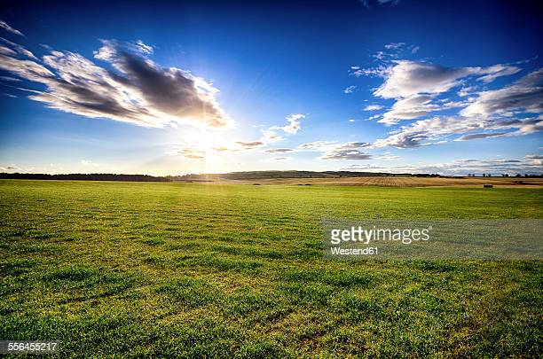 UK, Scotland, East Lothian, field at sunset