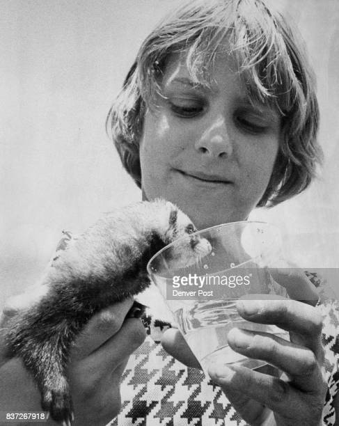 Scott Ellis holds a glass of water for Maxine a ferret which is the pet of Stott Kindergarten Kerry Giambrocco Credit Denver Post