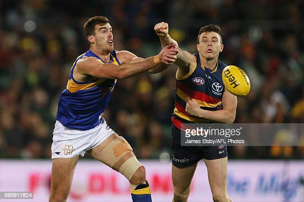 Scott Lycett of the Eagles competes with Jake Lever of the Crows during the 2016 AFL Round 23 match between the Adelaide Crows and the West Coast...
