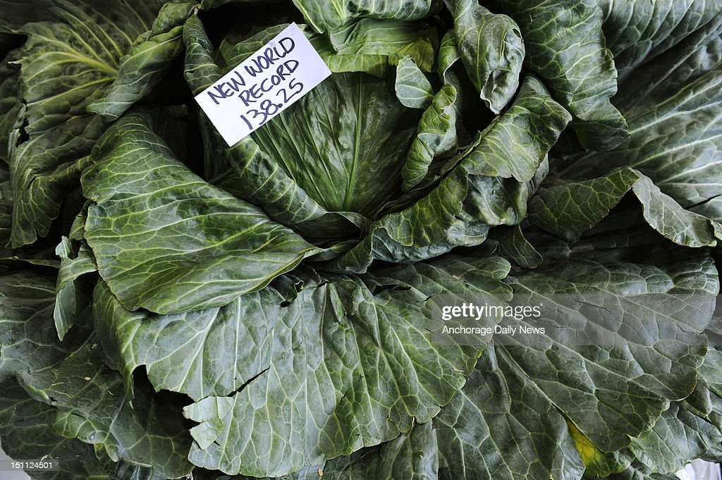 Scott Robb's world record-setting cabbage was on display in the barn at the Alaska State Fair in Palmer, Alaska, Saturday, September 1, 2012. Robb's entry weighed in at 138.25 pounds.
