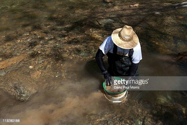 Scott Sprague of Manassas Virginia looks for gold in Woods Creek on April 29 2011 in Jamestown California As the dollar continues to fall gold...