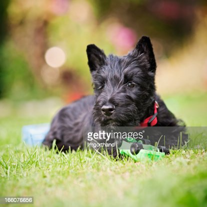 Scottie Chiot Et Sa Voiture Photo | Getty Images