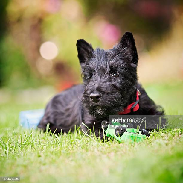 Scottie Puppy and his car