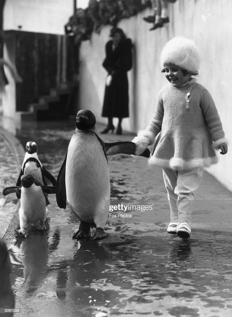A little girl hold a penguin's flipper as they walk together at London Zoo.