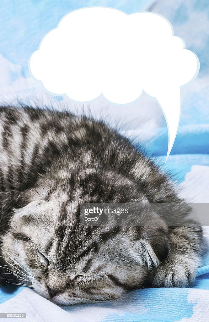 Scottish Fold kitten is sleeping and dreaming : Stock Photo