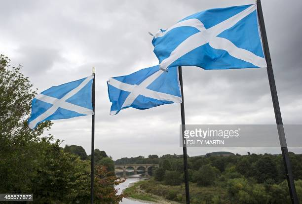 Scottish Saltire flags fly above the River Tweed in the town of Coldstream on the border between England and Scotland on September 16 2014...