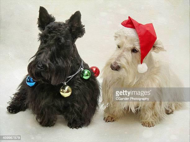 Scottish Terrier Christmas Dogs