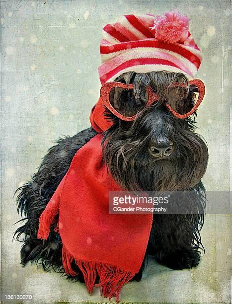 Scottish Terrier photograph Ski shoot