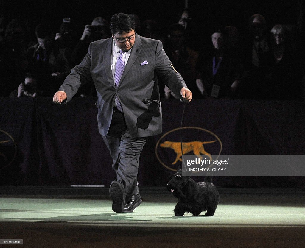 Scottish Terrier Sadie poses for the press with handler Gabriel Rangel after winning Best in Show at the 134th Westminster Kennel Club Dog Show at...