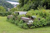 Old rusted car in overgrown weeds