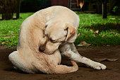 scratching himself dog outside in green garden