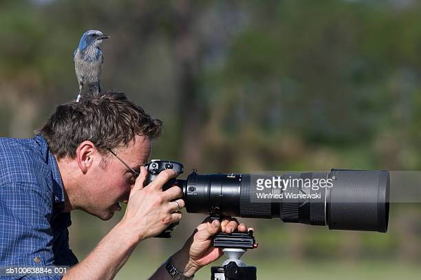Scrub jay on head of wildlife photographer, Oscar Scherer Preserve