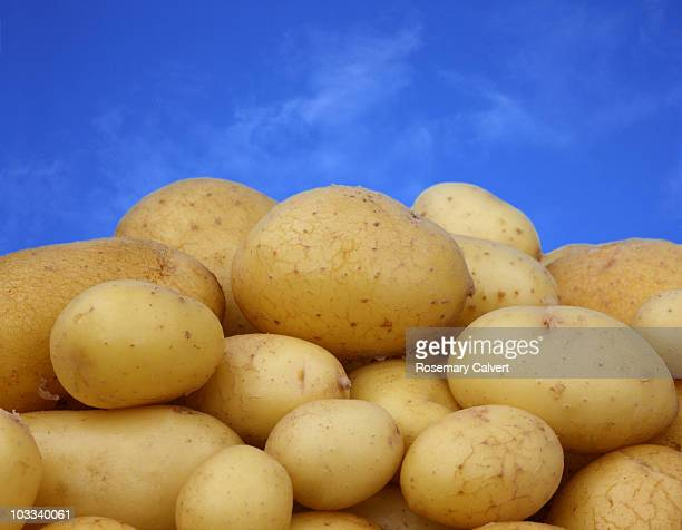 Scrubbed new potatoes against a blue sky.