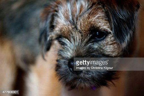 Scruffy Puppy : Stock Photo