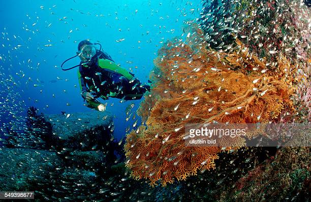 Scuba diver and coral reef Thailand Indian Ocean Phuket Similan Islands Andaman Sea