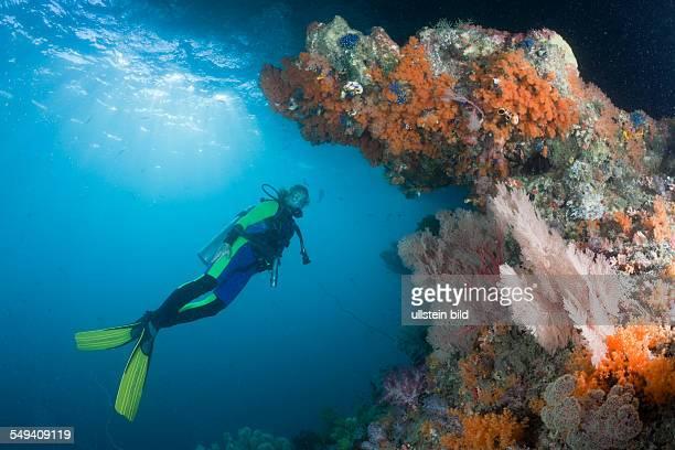 Scuba Diver and Corals Raja Ampat West Papua Indonesia