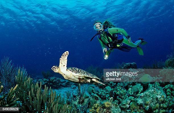 Scuba diver and Hawksbill sea turtle Eretmochelys imbricata Netherlands Antilles Bonaire Caribbean Sea