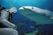 Scuba diver beside Caribbean reef shark (Carcharhinus perezi)