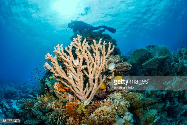 Scuba diver is exploring and enjoying Coral reef  Sea life  Sporting women