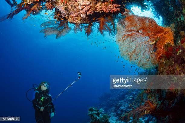 スキューバ ダイビングを探索し、珊瑚礁の海の生活スポーツ女性水中を楽しんで