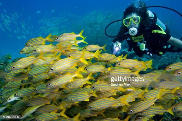Scuba Diver Looking at School of Fish