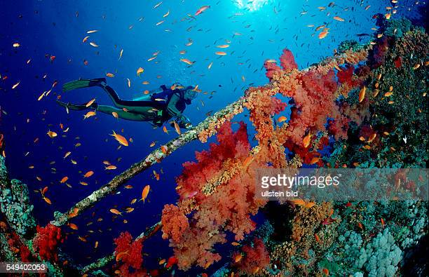 Scuba Diver near a wreck wreckdiving Egypt Red Sea Brother Islands Brothers El Akhawein