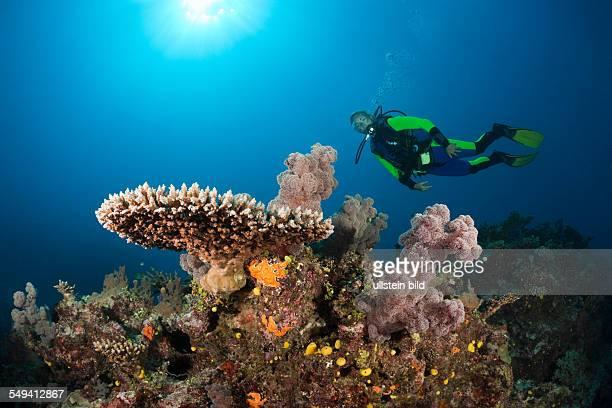 Scuba Diver over Coral Reef Wakaya Lomaiviti Fiji
