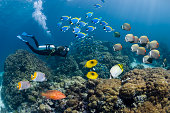 Scuba diver photographing tropical reef fish