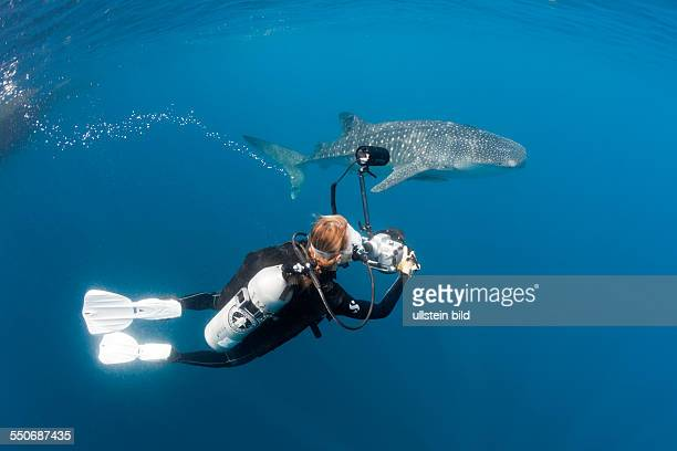 Scuba Diver photographing Whale Shark Rhincodon typus Cenderawasih Bay West Papua Indonesia