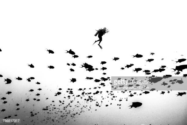 Scuba Diver Swimming By School Of Fish In Red Sea