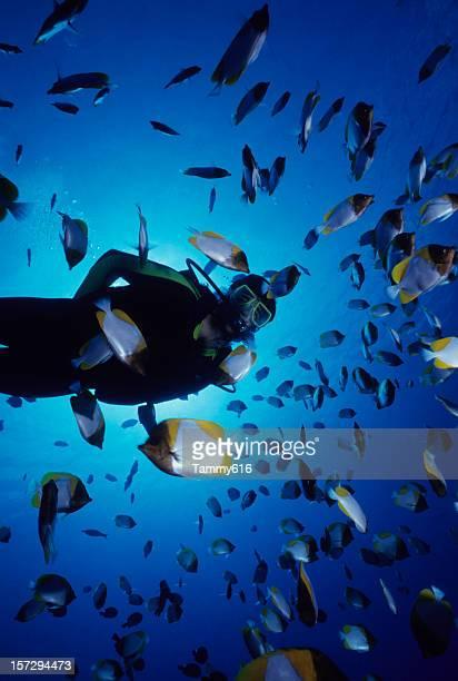 Scuba diver swimming with dozens of fish