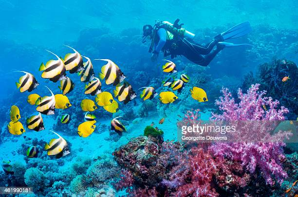 Scuba diver with a school of coral reef fish