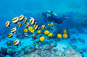 Scuba diver with coral reef fish