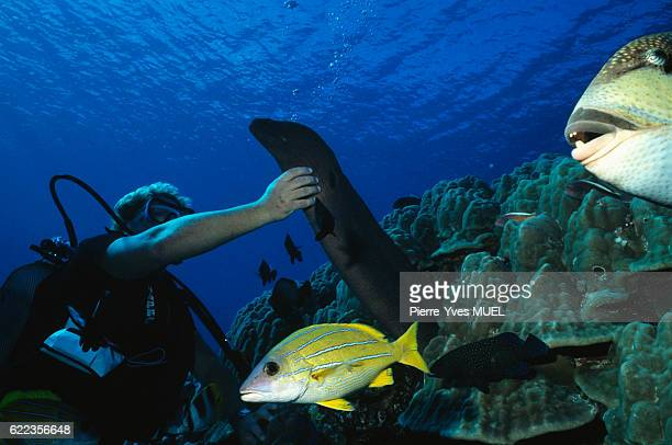 Scuba diver with moray eel