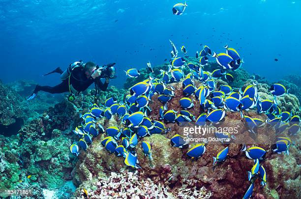 Scuba diver with Powderblue surgeonfish