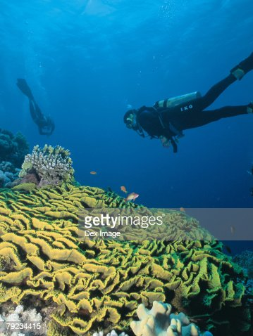 Scuba divers and coral reef, rear view : Stock Photo