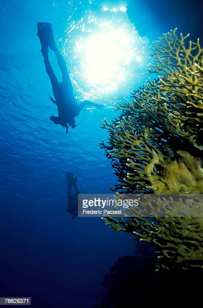 Scuba divers swimming above coral reef