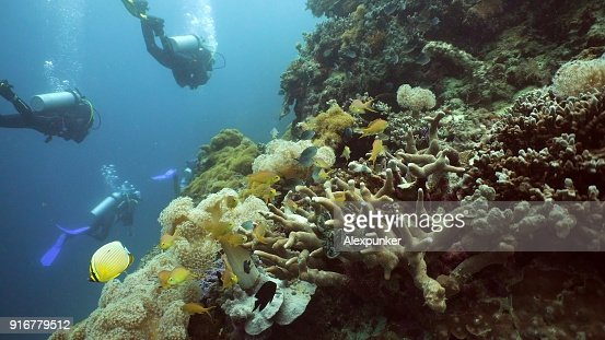 Scuba Divers underwater : Stock Photo