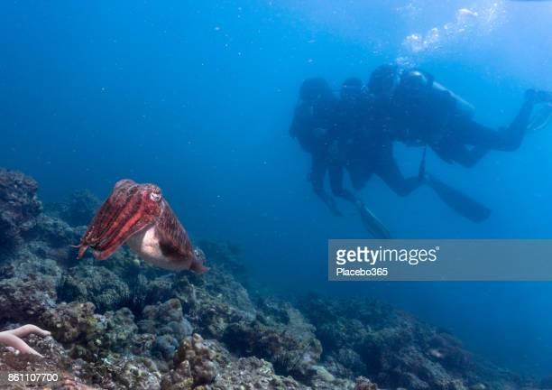 Scuba Divers with Cuttlefish (Sepia latimanus)
